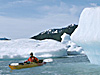 bear glacier sea kayaking